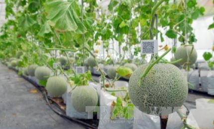 Project on developing the agricultural biotechnology industry to 2030